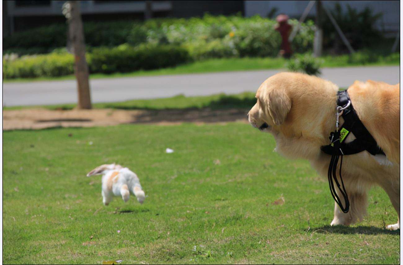 大狗总是欺负小狗?这么多年,很多人都错了