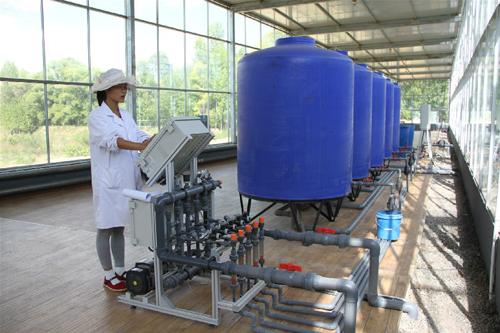 靠高科技加持的智能玻璃温室番茄,凭什么做到每平米产量70公斤