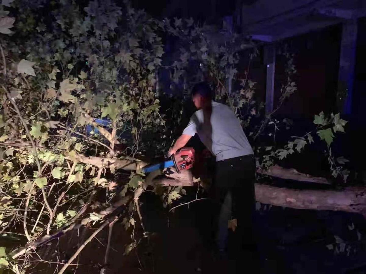 大树横躺公路 大英县民警及时清理