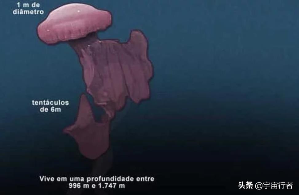 2100米海底有多恐怖?若你近距离接触冥河水母,灵魂会被摄走