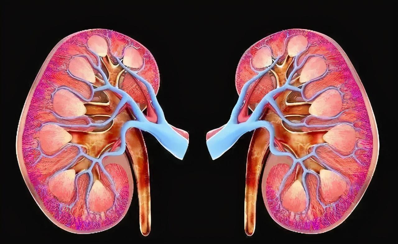 春养肝、夏养心、秋养肺、冬养肾,教你一年四季怎么养 中医养生 第3张