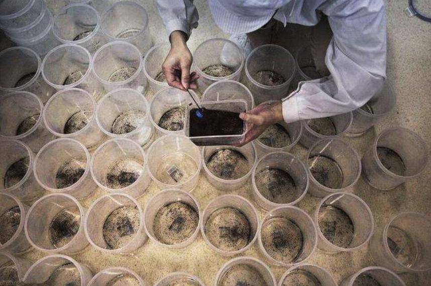 美国将释放7.5亿只转基因蚊子,专家:恐将制造更强的变异蚊子