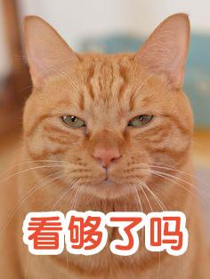 猫对你是真爱吗?弄明白这些你就懂了