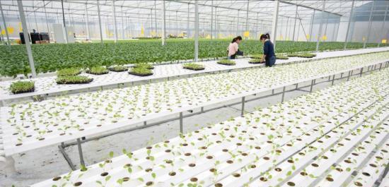 """现代农业示范基地:""""智慧农业""""助力乡村振兴"""