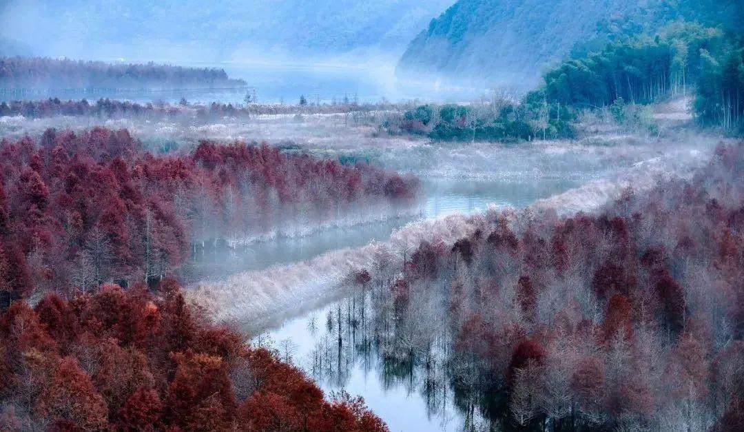 惊艳!惊现!皖南川藏线秋天难得一见的水上红杉林