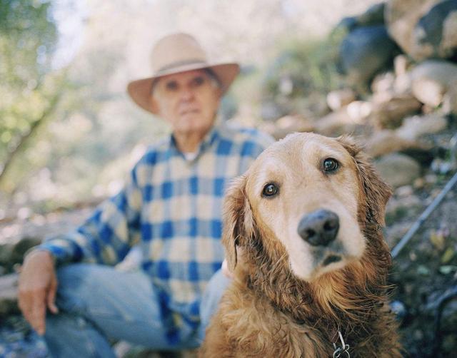 老年狗出现这些表现,是在跟你告别,好好珍惜