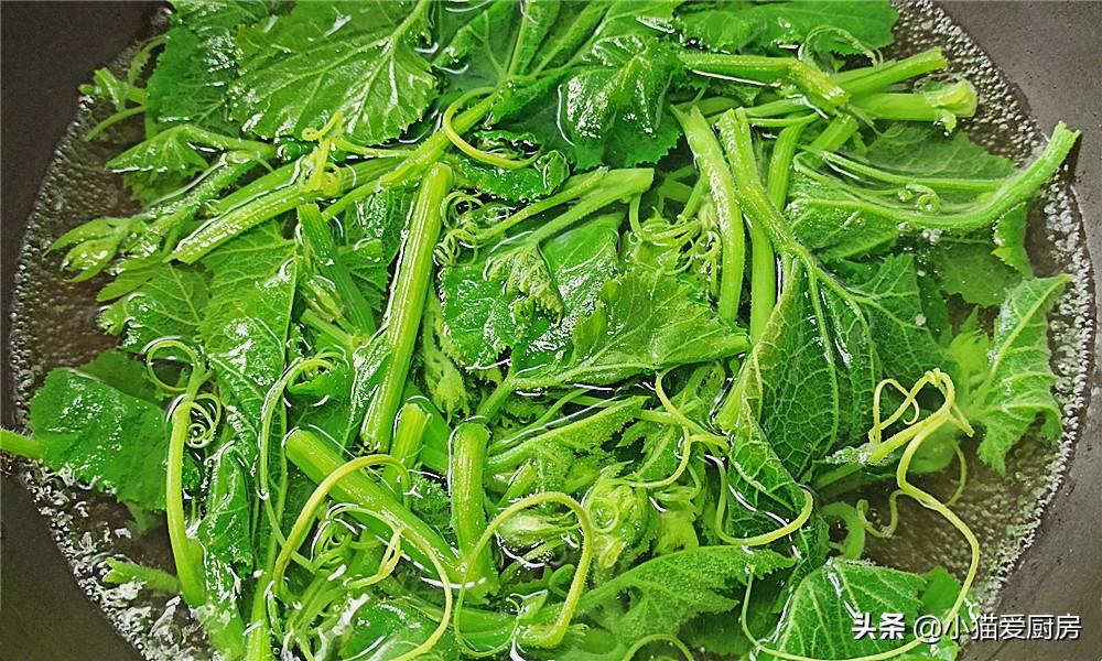 【凉拌南瓜尖】做法步骤图 把它做成凉拌菜来吃 味道清香特别