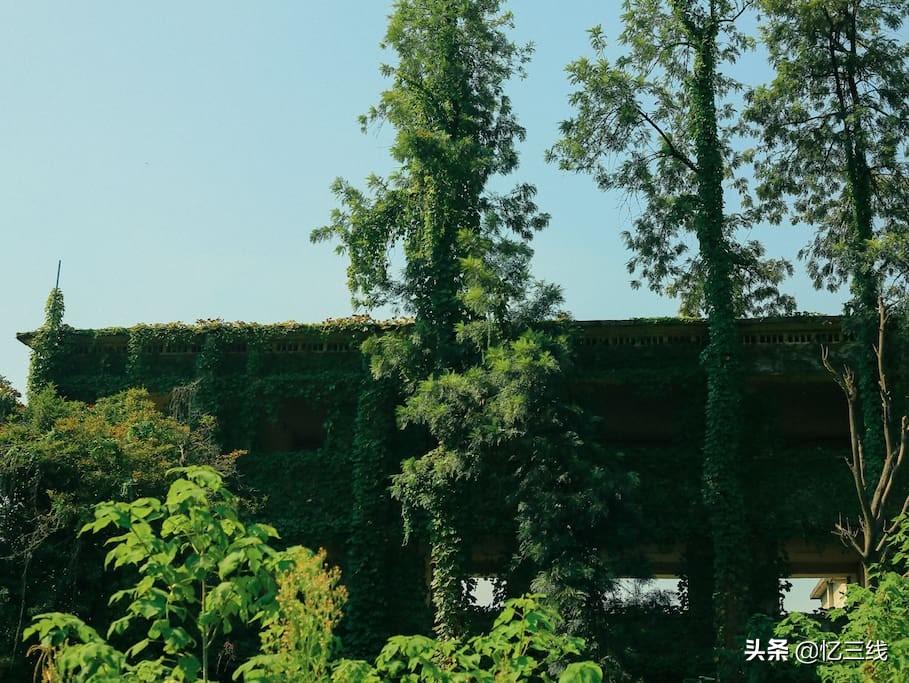 重庆废弃的军工厂,复古厂房加绿意盎然,有着浓郁的民国风情