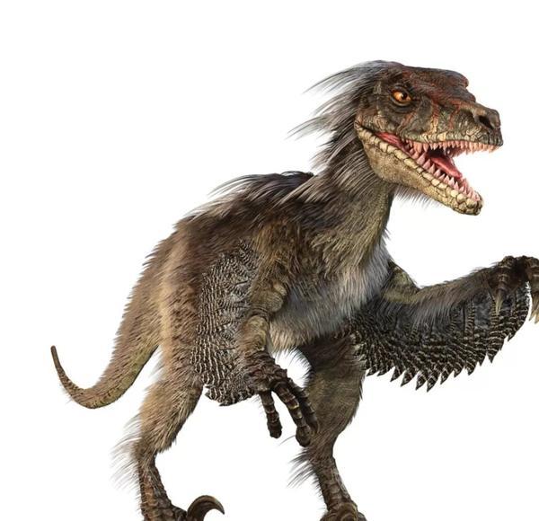 伶盗龙到现在还居所未定,或将搬家到始祖鸟纲?
