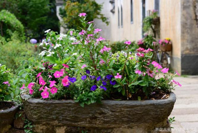 10个养花常识,杜绝黄叶落叶,花儿蹭蹭长 家务卫生 第8张