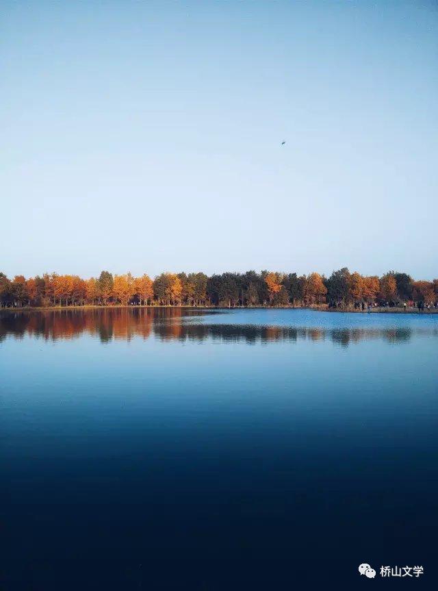 我在秋天,看胡杨