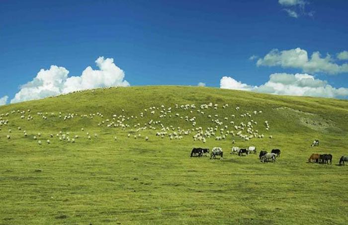 牛羊养殖混养技术研究及注意事项