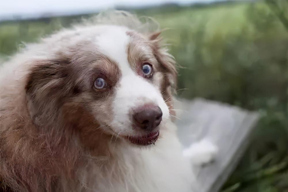 狗狗7、8岁以后,如果注意这些问题,会更加长寿