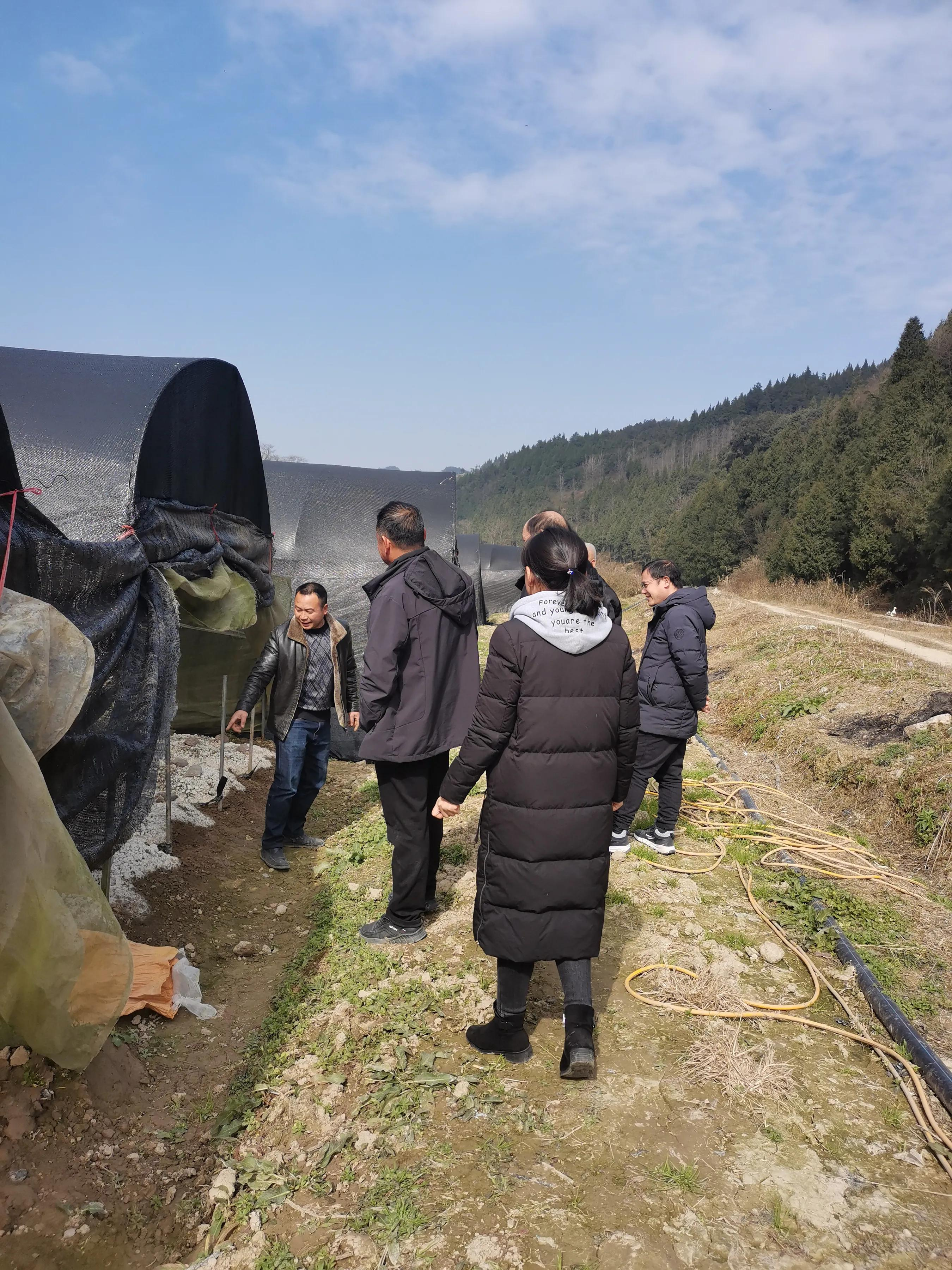 贵州大学食用菌分队专家指导松桃九江羊肚菌产业发展
