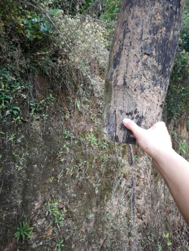 汉阴县涧池镇惊现空中悬浮两年之久通信杆