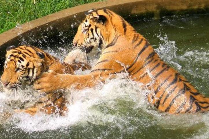 南京一动物园实火,半天涌进1.7万人,网友笑称:人比动物多