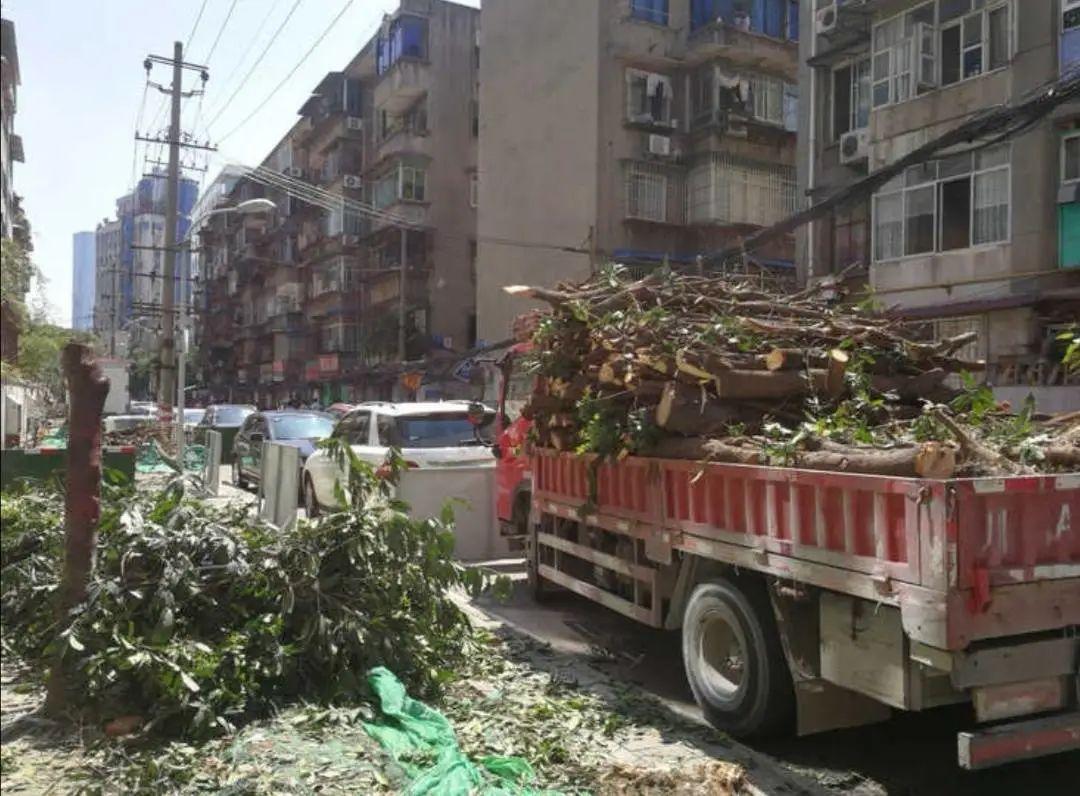 成都300年桂花巷内桂花树全被砍!如此野蛮施工,谁批准的?官方回复来了