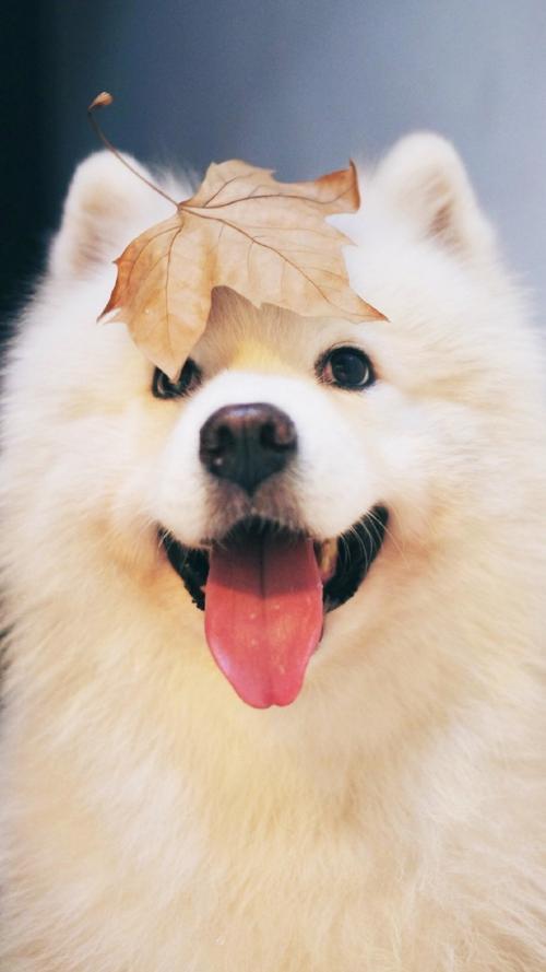 """狗被主人""""征服""""的6大表现,它会死心塌地追随你哦"""