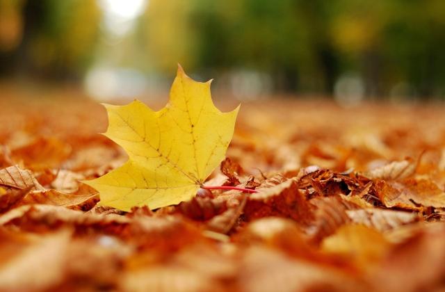 描写秋风吹在身上的句子 喜欢秋风拂面的感觉说说