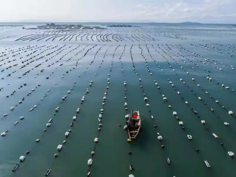 """《蓝色经济对话》视频访谈王诗成谈""""海上粮仓建设"""""""