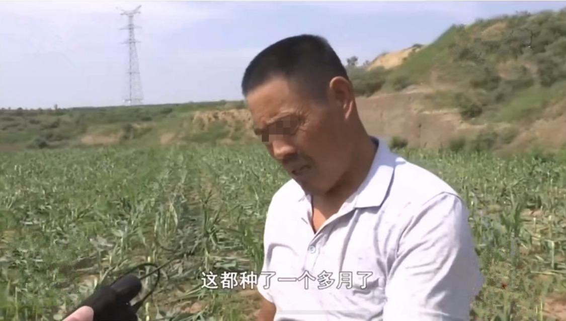 庄稼连续三年被毁!玉米苗被连根砍断,黑手竟是至亲:耕地归属有争议