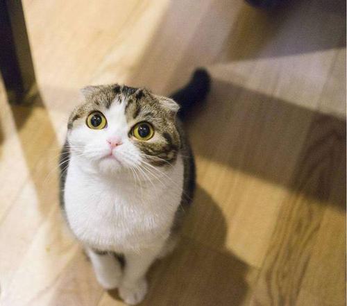 """想要快速了解你的猫咪?请学好这6种""""猫语"""""""