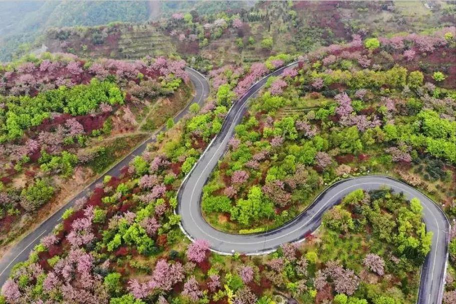 宁波赏樱线路,夹道数十里,落樱缤纷,提前收藏春日里的小美好
