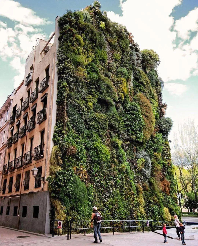 生态庭院设计——绿色屋顶与绿色墙壁