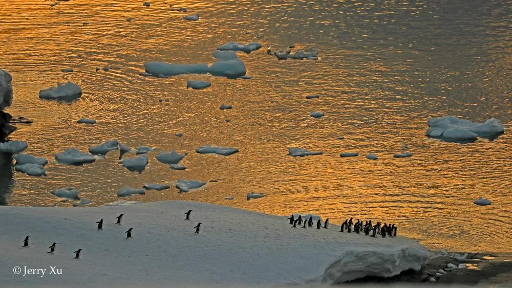 疫情全国清零了!如果有机会去南极看冰山企鹅,你愿意待几天?