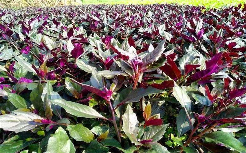 2021年在农村种植什么不愁销、利润高、比较有前景?推荐一些