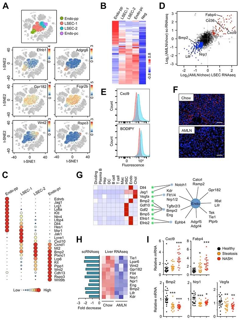 MolCell单细胞测序揭示健康非酒精性脂肪性肝炎肝脏细胞通讯图谱