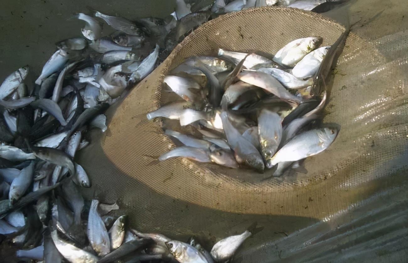 水产养殖七种常见病害的防治