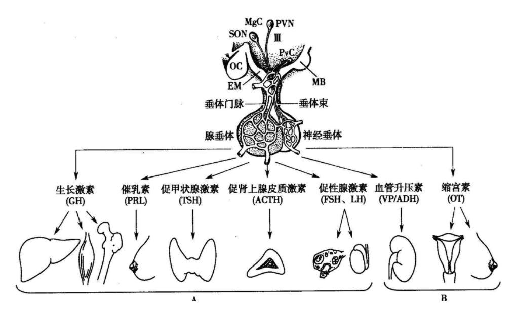 """中国家庭之殇:53万儿童性早熟,""""毁掉""""孩子的不是炸鸡和豆浆"""