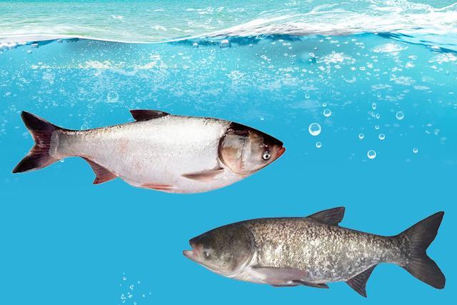 成品鱼养殖的苗种放养密度!没有公式或者标准来套用