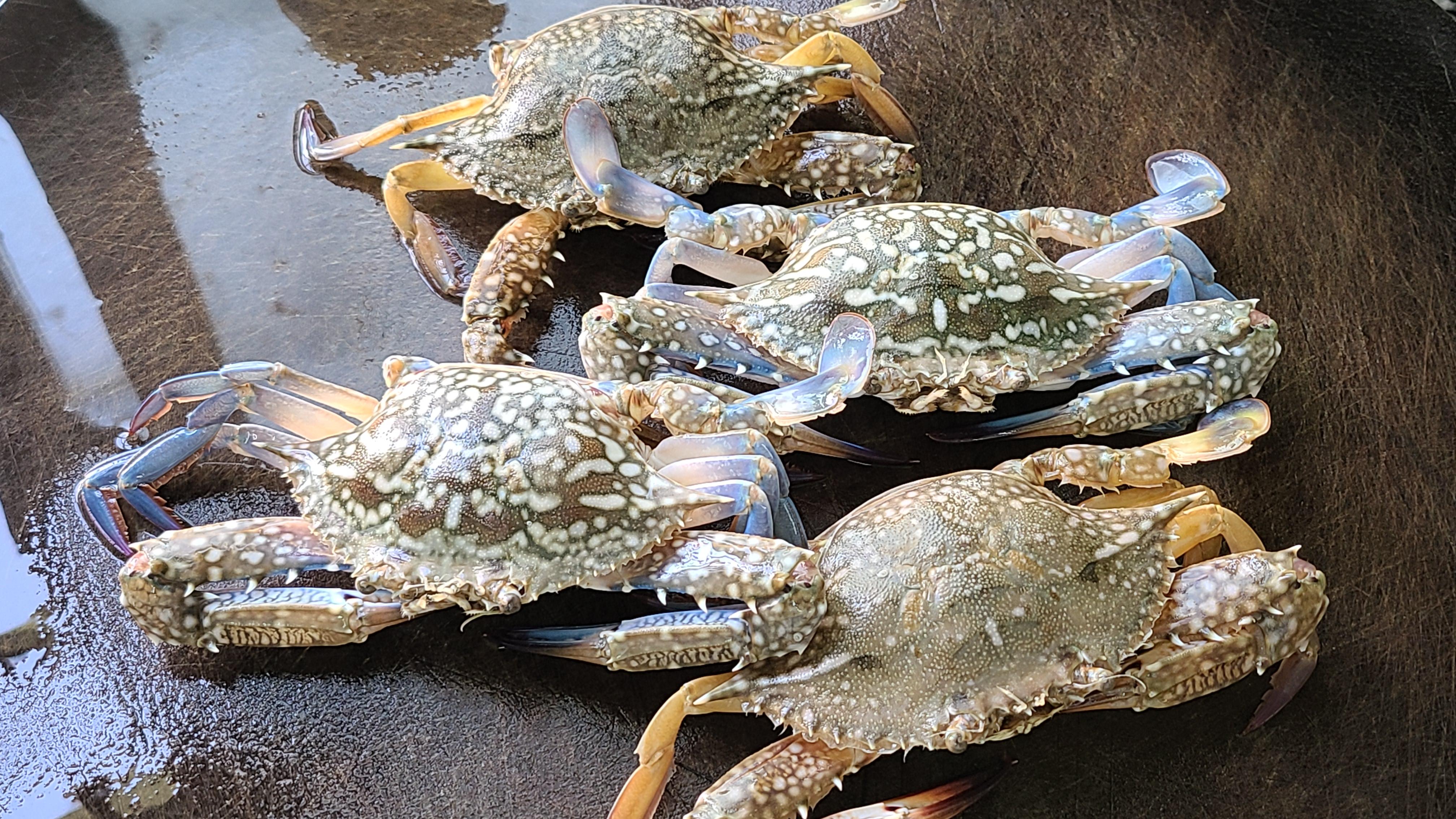 螃蟹燜雞的做法,香味濃郁,好吃下飯,看著肚子都餓了