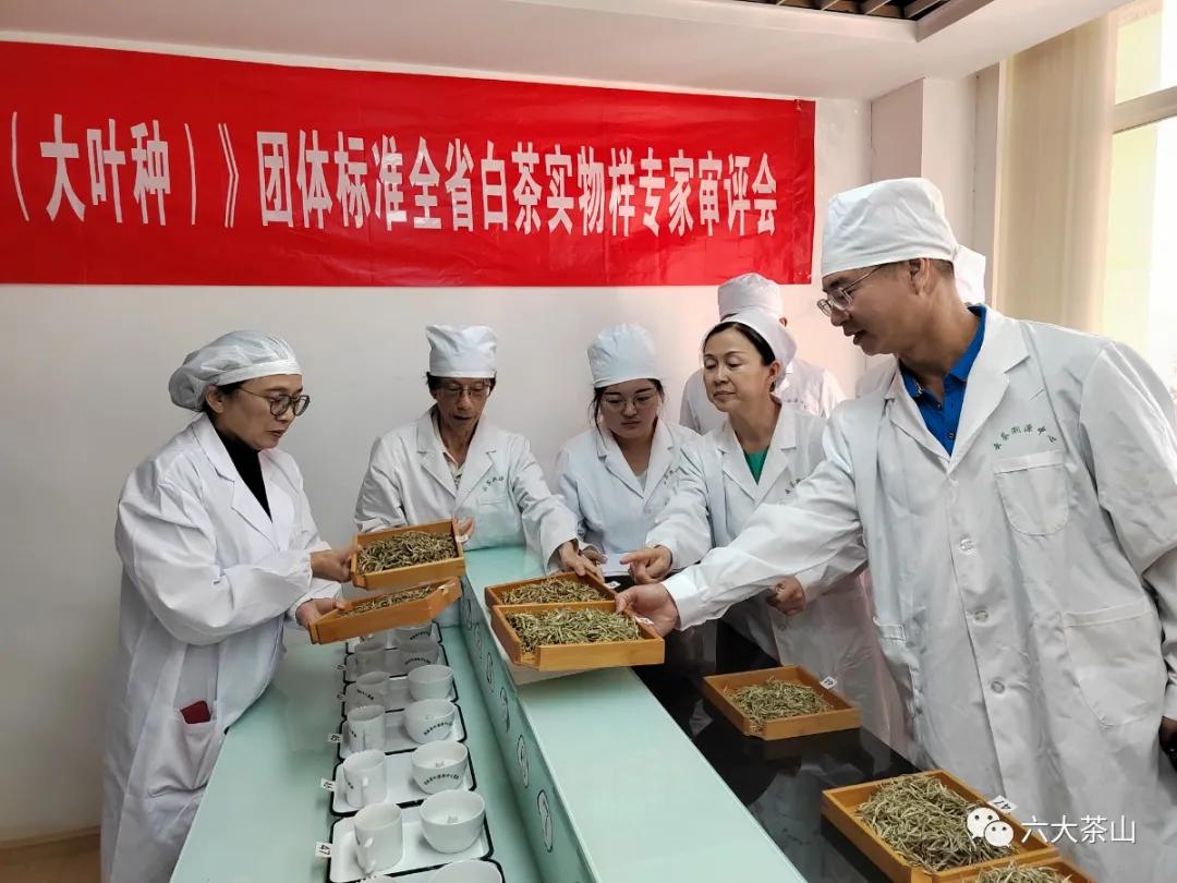 六山积极配合云南省白茶团体标准制定工作,助力云南白茶产业发展