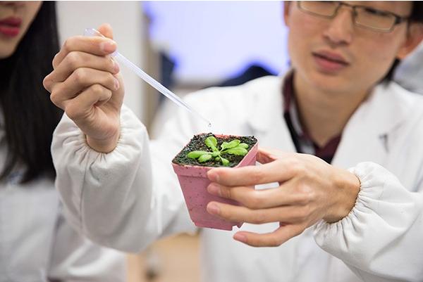 温肯科研人 理工学院教授科研解密植物繁殖过程中的关键蛋白