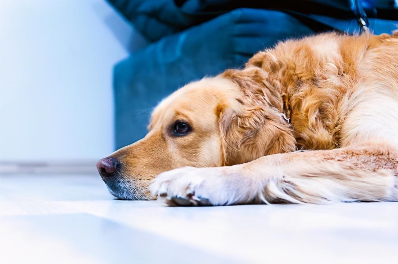 狗狗什么情况下会流泪?记住这六点