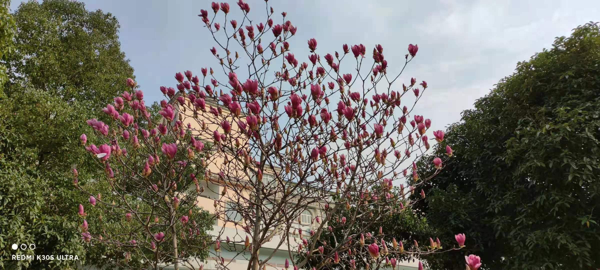 """组图:武汉这所大学校园成""""花的海洋""""各类鲜花竞相开放"""