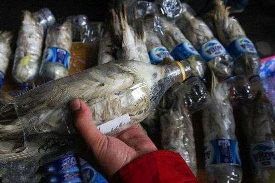 海关截获一批走私物品,走私分子将鹦鹉放在矿泉水瓶内