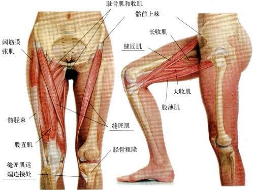 無器械腿部鍛鍊方法,這2個腿部訓練動作,你需好好掌握