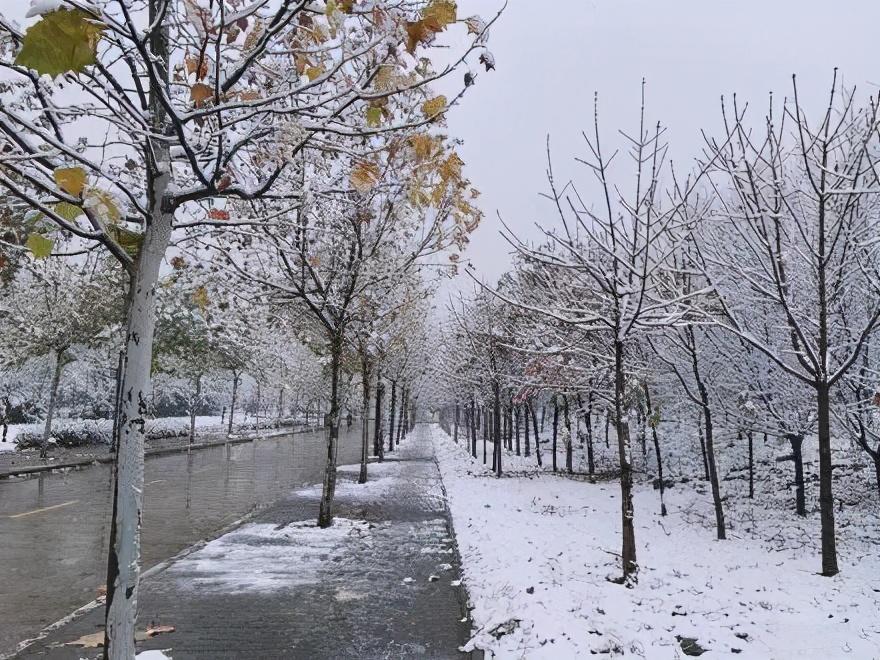 西安下雪啦!忽如一夜春风来,西安一梦回长安