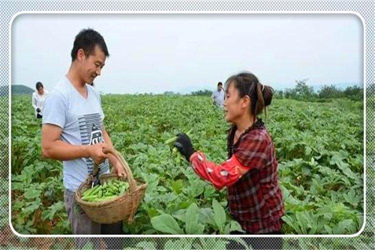 40岁的人明年不准备外出打工,想在农村搞种植,种什么效益高?