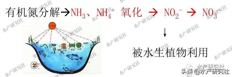 含盐量多少最好,水体硬度碱度怎样调节,为什么自来水不能养鱼?
