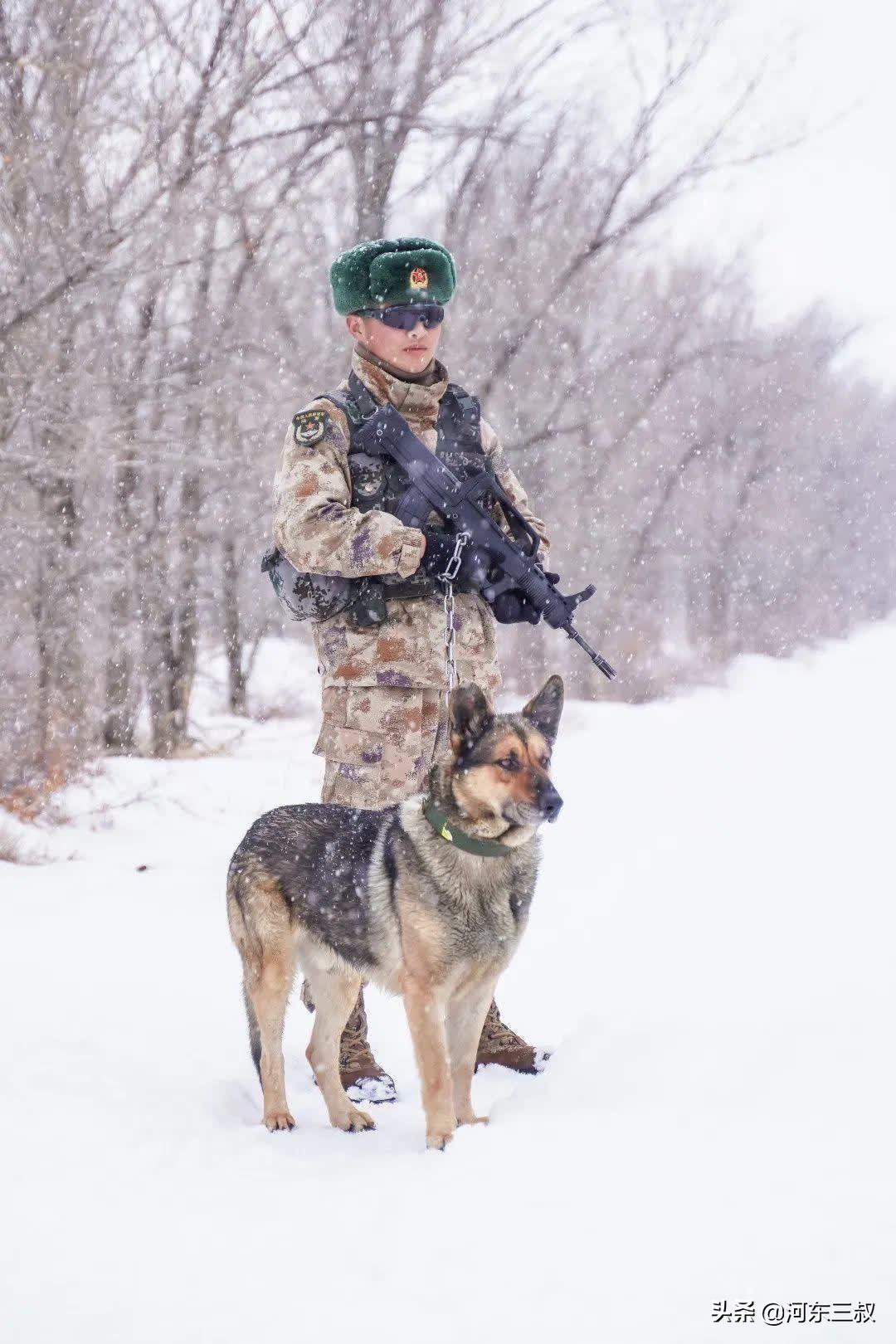 中印边境冲突,表现神勇的军犬叫毛毛,曾被印军石头砸伤