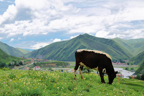 国内9条最让人向往的自驾路线,承包了整个中国的美! 