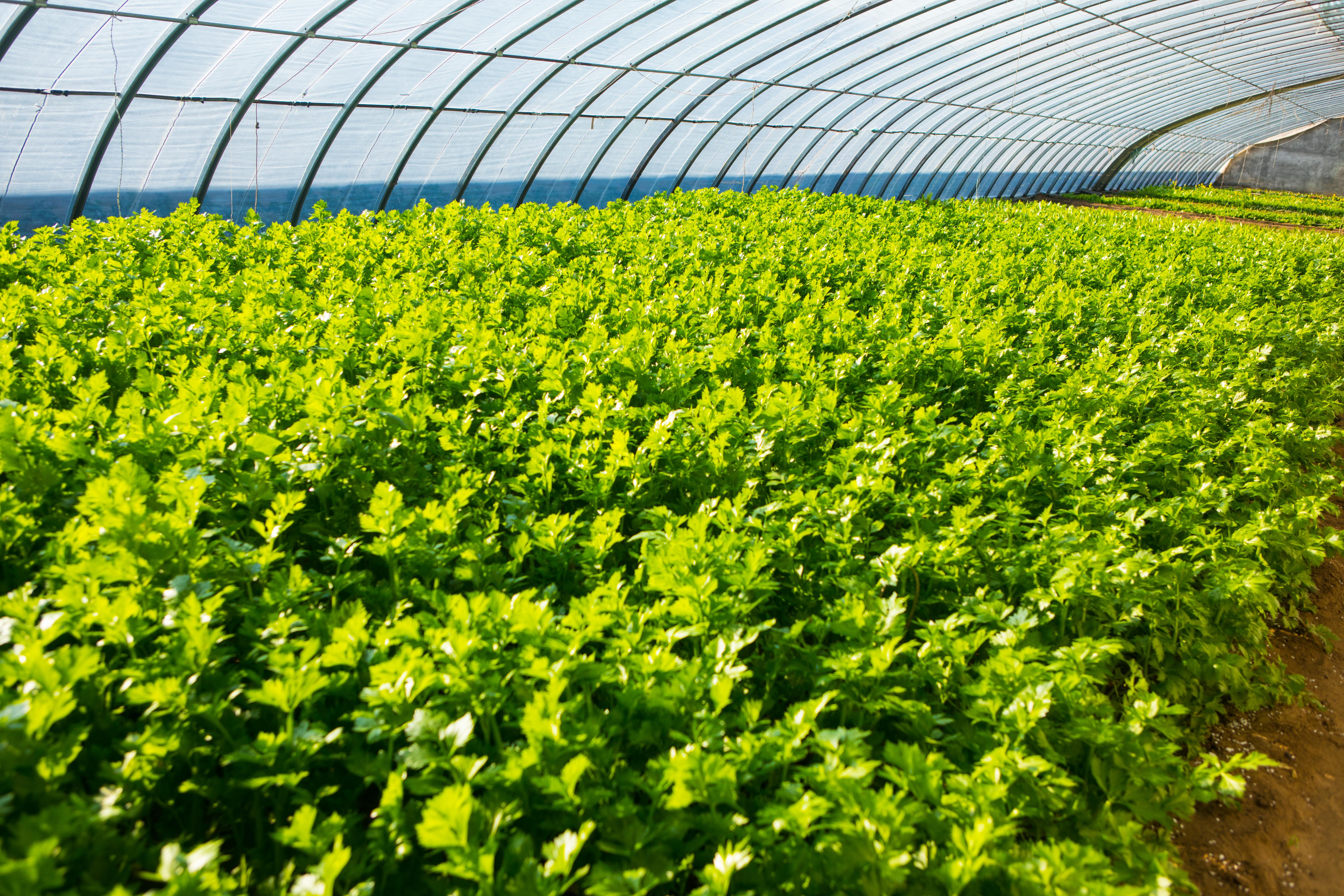 脱贫致富 巾帼先行|一芳田童趣农庄——科技带农致富