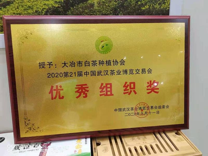 春尝一口鲜,首届殷祖白茶文化旅游节即将开幕