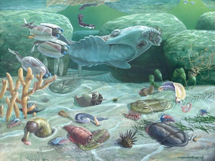 寒武纪生命大爆发的证据,这个5.14亿年前的生物或许就是答案-第1张图片-IT新视野