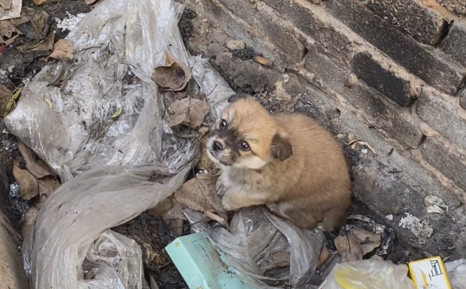 疑似被遗弃,两只小奶狗冻得直发抖却只能相互取暖:谁来帮帮我们
